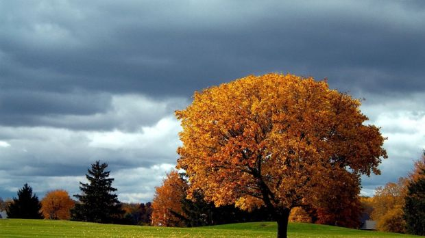 autumn-leaf-tree-sky-grass-cloud